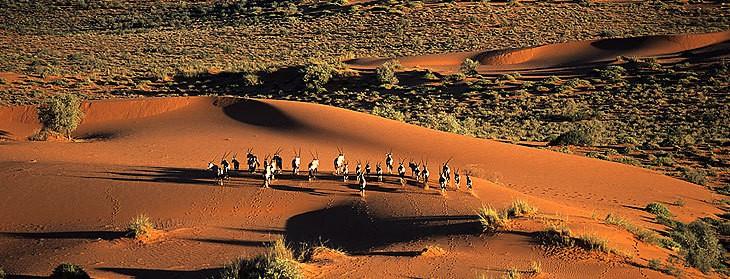 Les dunes rouge de kalahari