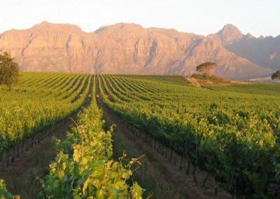 Stellenbosch et Franschhoek Wine