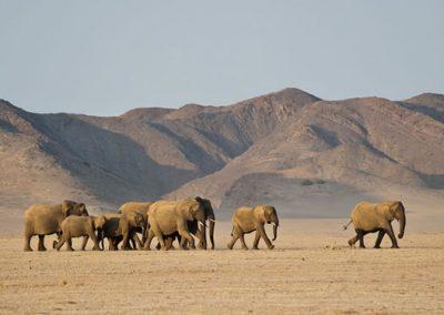 elefants du desert damaraland