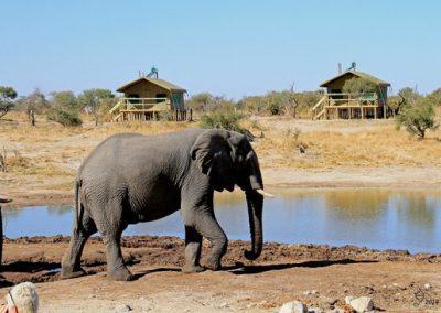 elephant-sands-botswana
