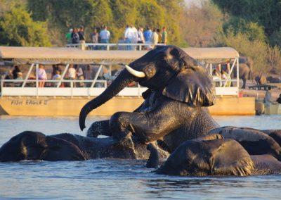 safari on boat